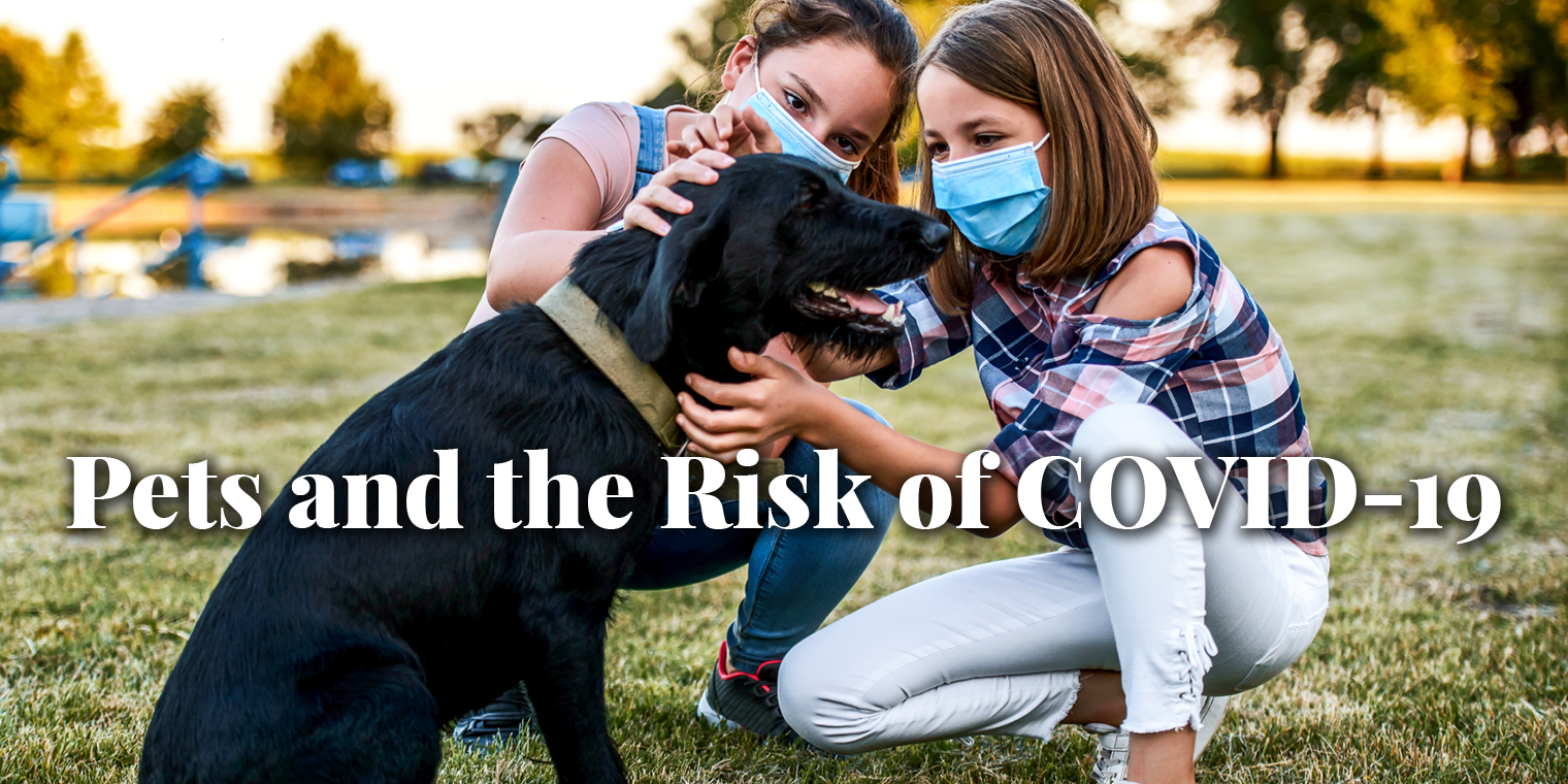 Pets and the Risk of COVID-19